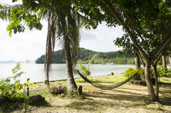 Möblemanghängmatta som hänger mellan palmträd i trädgård av semesterorten Arkivfoto