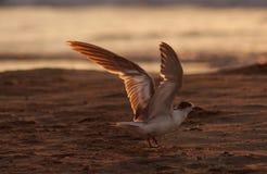 Möchten mit Seemöwen fliegen Stockbilder
