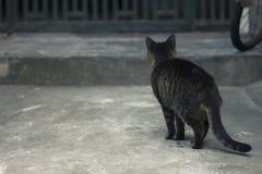 Möchten nach Hause Streugehen katzen Stockfotos