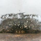 Möglade väggar Royaltyfria Bilder