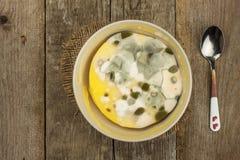 Möglig pudding Giftig mat mycket av formen sjuklig mat Spor av svampen för mat Royaltyfria Bilder