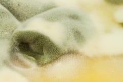 Möglig pudding Giftig mat mycket av formen sjuklig mat Spor av svampen för mat Royaltyfri Foto