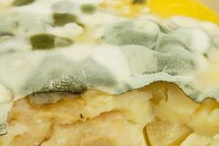 Möglig pudding Giftig mat mycket av formen sjuklig mat Spor av svampen för mat Arkivfoton