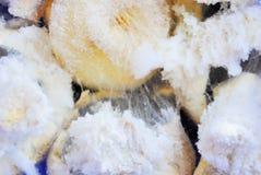 möglig svamp arkivbilder