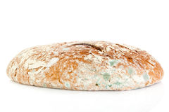 Mögligt bröd som isoleras på vit bakgrund Arkivbilder