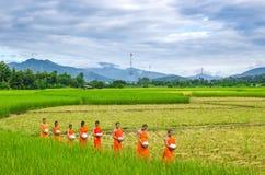 Mönche, die auf dem Reisgebiet, Chiangmai, Thailandorniong gehen Lizenzfreies Stockfoto