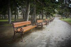 Mönstra bänken i parkera med sörjer träd, gräs Arkivfoton