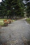 Mönstra bänken i parkera med sörjer träd, gräs Royaltyfri Foto
