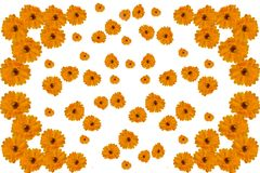 Mönstra illustrationen av blommor av calendularingblomman på vit bakgrund royaltyfri illustrationer