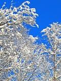 mönstrad den soliga vintern Arkivfoto