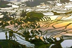 Mönstrad skönhet av risterrasserna Arkivbilder