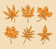 Mönstrade Autumn Maple Leaves Royaltyfri Bild