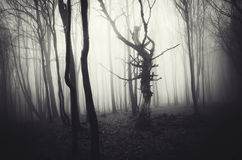 Mörk allhelgonaaftonplats av den spökade skogen med dimma Arkivbild