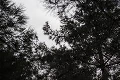Mörk atmosfärfors på trän royaltyfri bild