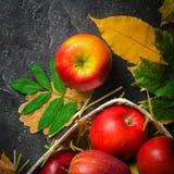 Mörk bakgrund för höst eller ram av stupade gulingsidor och mogna röda äpplen Ram för text eller foto Tillämpbart för Arkivbild