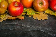 Mörk bakgrund för höst eller ram av stupade gulingsidor och mogna röda äpplen Ram för text eller foto Tillämpbart för Royaltyfri Foto