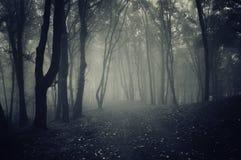 Mörk bana i skog med mystisk dimma Arkivfoto