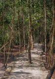 Mörk bana som leder till och med den mexicanska djungeln med att växa för träd royaltyfri bild
