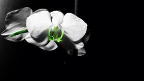 mörk blomma Arkivbild