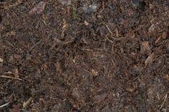 Mörk brun mylla i skogjord royaltyfri foto