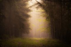 mörk dimma Arkivfoton