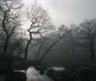 mörk dimma Arkivbilder