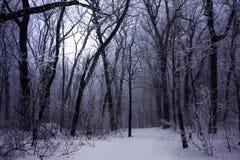 mörk dimmaskogvinter royaltyfri foto