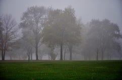 Mörk dimmig morgon i en parkera Royaltyfri Fotografi