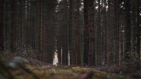 Mörk dramatisk skog i Belgien Arkivbild
