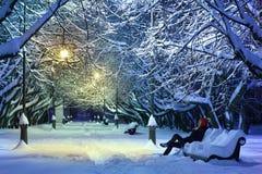 mörk frostig nattparkvinter Arkivfoto