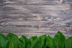 Mörk gammal träbakgrund med den härliga nya hostaen lämnar ordnat i rad Tappningmodell Top beskådar Lekmanna- lägenhet Arkivfoto