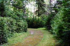 mörk grusbanaväg i aftonskog Arkivbild