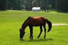 mörk häst Royaltyfria Bilder