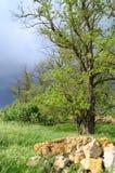 Mörk himmel stenar trädlövverk Royaltyfria Foton