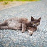 Mörk katt Royaltyfri Foto