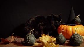 Mörk katt bredvid en röd pumpa på en svart bakgrund arkivfilmer