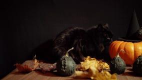 Mörk katt bredvid en röd pumpa på en svart bakgrund stock video