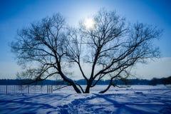 Mörk kontur av det ensamma trädet, mitt emot ett solljus arkivbild