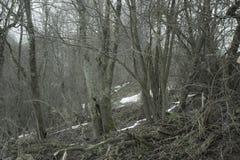 Mörk kuslig skog Royaltyfria Foton