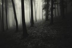 Mörk kuslig spöklik skog med dimma royaltyfria bilder