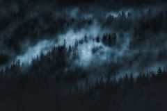Mörk läskig skog med dimma Royaltyfri Bild