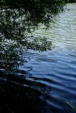 mörk lake Arkivbilder