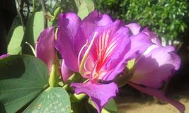 Mörk lila blomma Arkivfoton