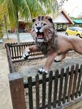 mörk lion arkivfoton
