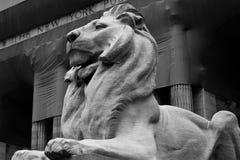 mörk lion Arkivfoto