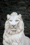 mörk lion Arkivbild