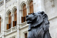 mörk lion Royaltyfri Bild
