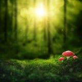 Mörk magisk skog royaltyfria foton