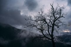 Mörk molnhimmel för träd från toscana Arkivbilder