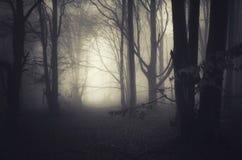 Mörk mystisk skog med dimma Royaltyfri Fotografi